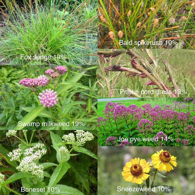 prairie cordgrass joe pye weed boneset sneezeweed
