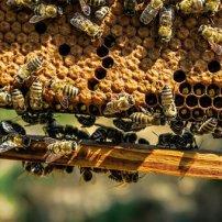 apiary-1867537__340