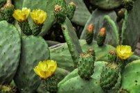 flower-3477994__340