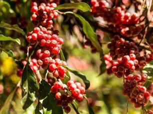 autumn-olive-2729140__340 (1)