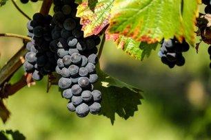 grapes-1696921__340