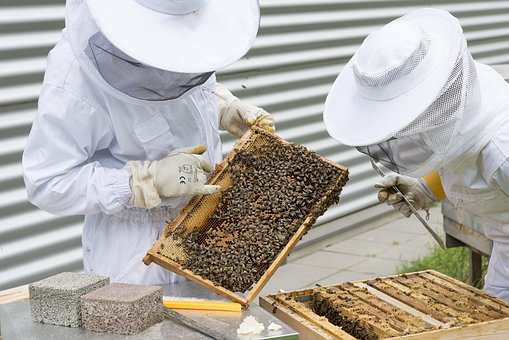 beekeeper-2650663__340.jpg