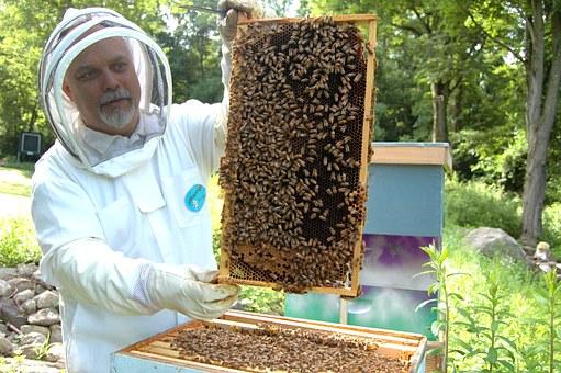 beekeeper-682944__340